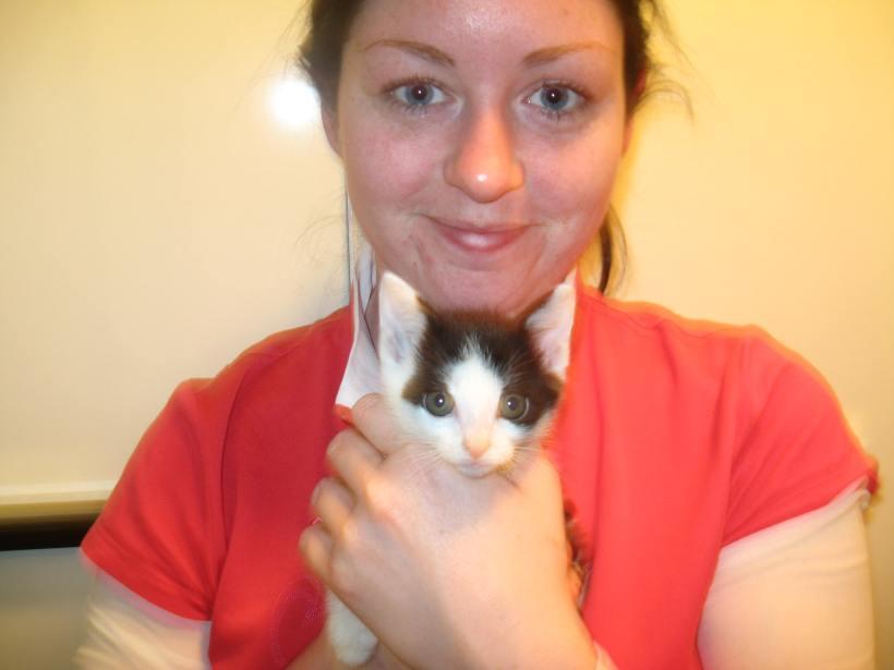 1 Kitten